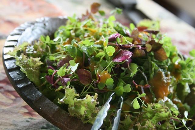 アルファルファのグリーンサラダ